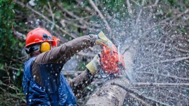 Baumpflege & Baumfällung